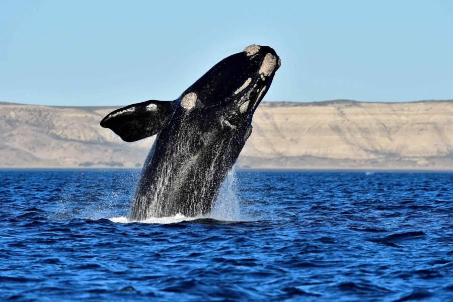 Ballenas serán vistas hasta marzo en costas de México