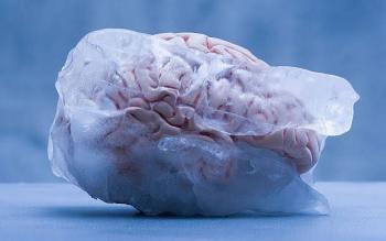 Ofrecen un camino a la inmortalidad a través de ¿cerebros congelados?