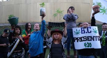 Movimiento Cannábico Nacional siembra 8 plantas de marihuana en el Ángel de la Independencia