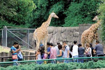 Destinarán 100 millones de pesos para renovación de los zoológicos de Aragón y Chapultepec