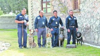 Con perros rescatados evitan plagas en el país
