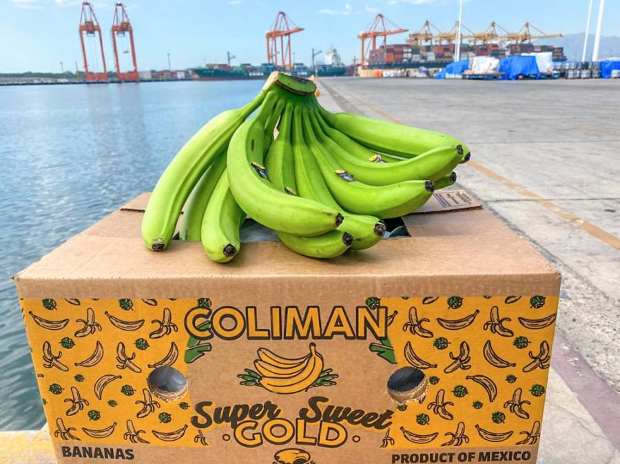 México comienza a exportar plátano a China