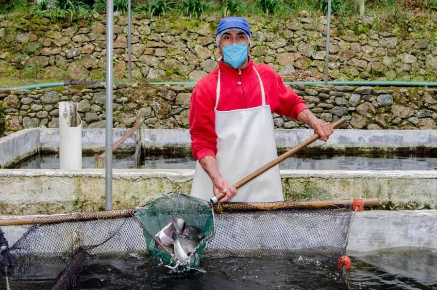 Benefició 140 mil productores Programa de Fomento a la Productividad Pesquera y Acuícola