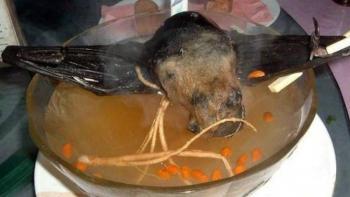 Sopa de murciélago, podría explicar el origen del nuevo coronavirus