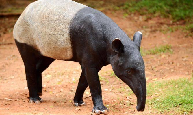 57 animales mueren al incendiarse un zoológico de Francia