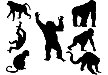 Comercio de animales salvajes aumenta riesgo de epidemias