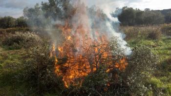 Agricultura y CIMMYT promueven alternativas para evitar quemas agrícolas