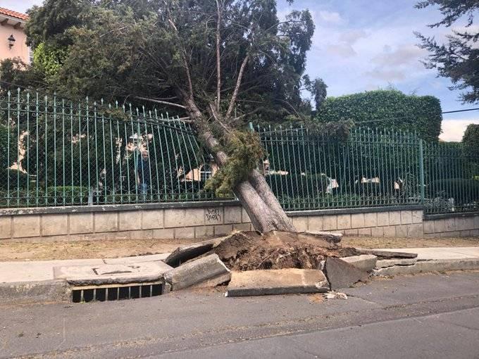 Fuertes vientos en CDMX dejan 6 lesionados y caída de ramas y árboles