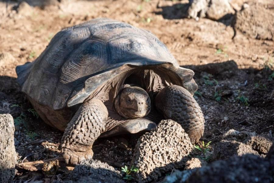 Expedición en Galápagos halla una tortuga pariente de Solitario George