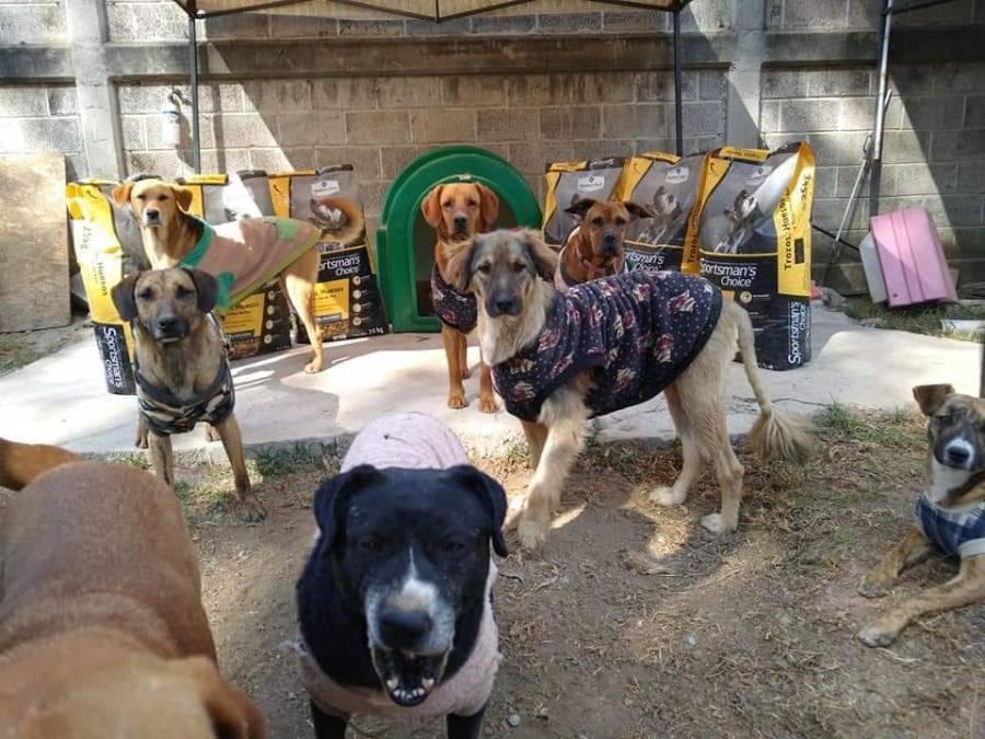 Queman refugio de animales en Chalco