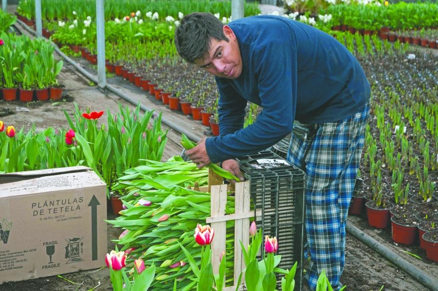 Se alistan productores para atender demanda de flores