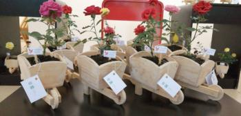 Presos plantan rosas para comerciar en el Día de San Valentín.