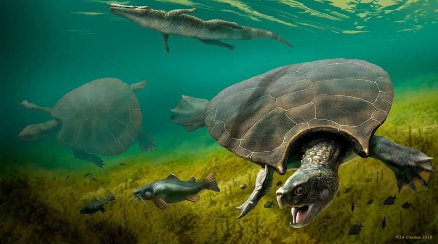 Hallan fósiles de gigantesca tortuga con cuernos