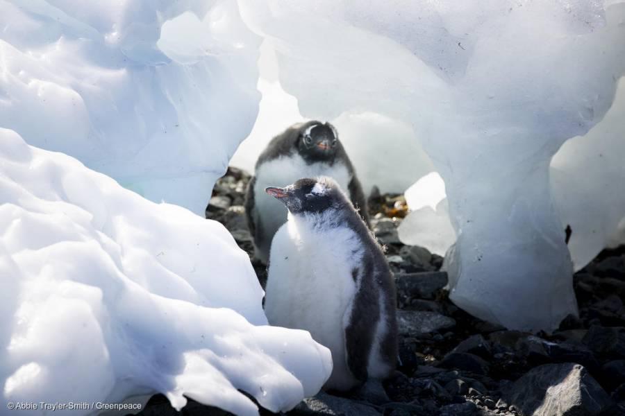 La Antártida registró temperaturas record