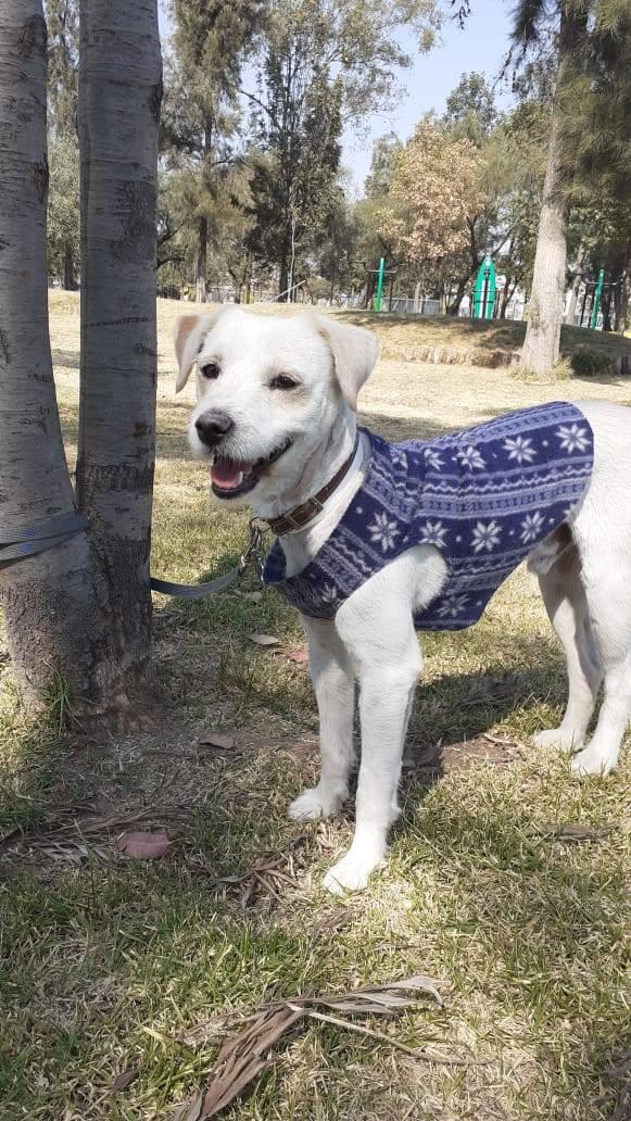 Protege a tu mascota del frío: Municipio de Chihuahua