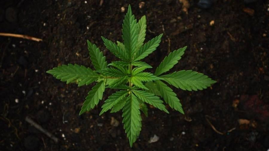 Aseguran más de una tonelada de mariguana en Sinaloa