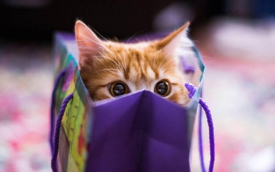 ¿Qué tan bueno es regalar mascotas en San Valentín?