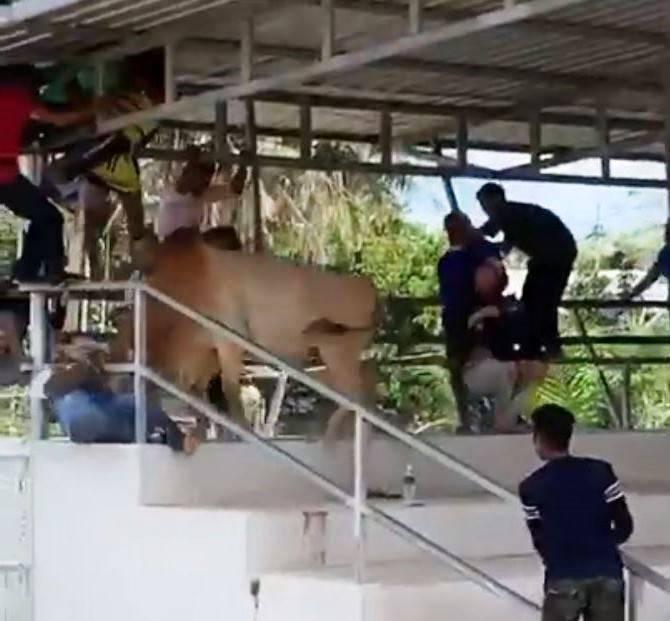 Toro ataca a mujer en Tailandia