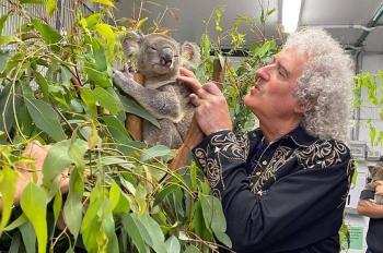 Brian May, de Queen, convive con koalas salvados de Australia