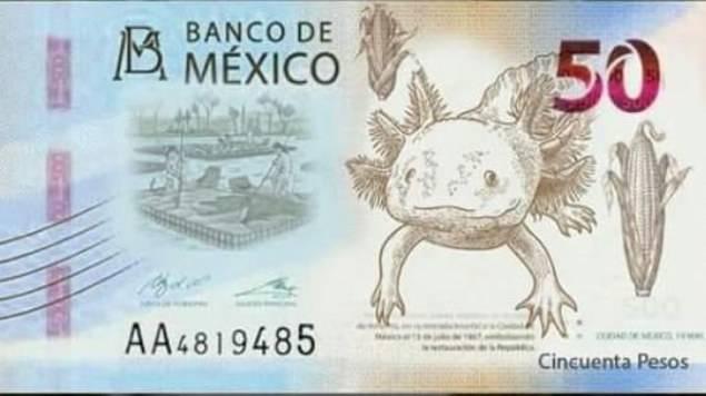 El ajolote, nueva imagen del billete de 50 pesos