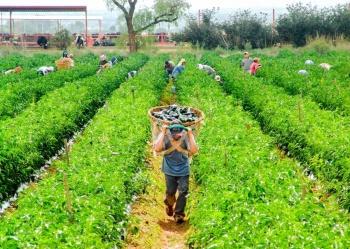 Crece 6% comercio agroalimentario México-EU