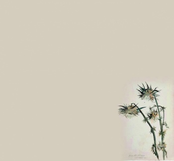 Dibujos revelan afición de Velasco por la botánica