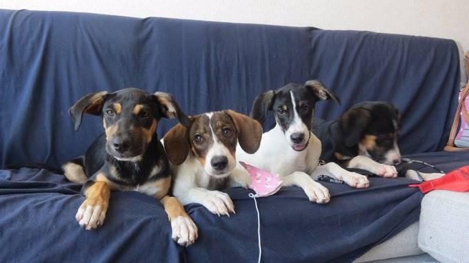 Cinco lugares para adoptar un cachorro