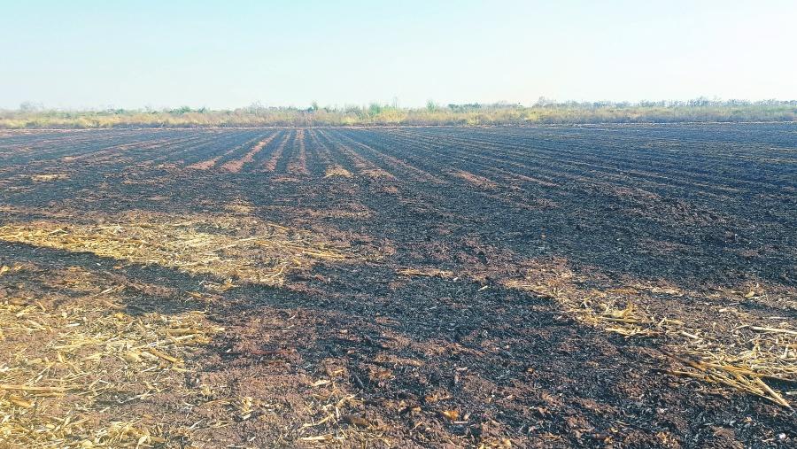 Buscan evitar quema de pastizales en Chiapas