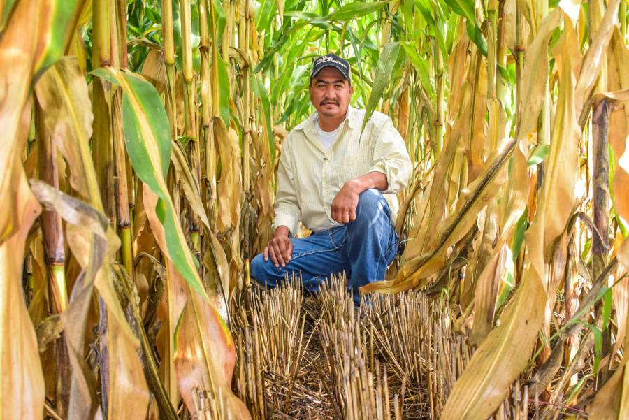 Aplican sistemas integrales de prácticas sustentables en la agricultura del sur sureste