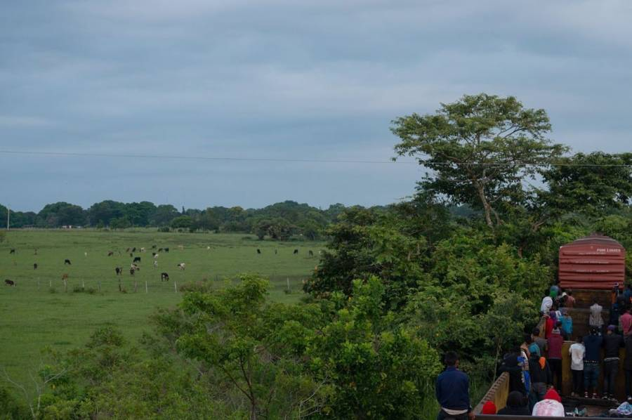Conacyt ocultó informe crucial sobre impacto del Tren Maya