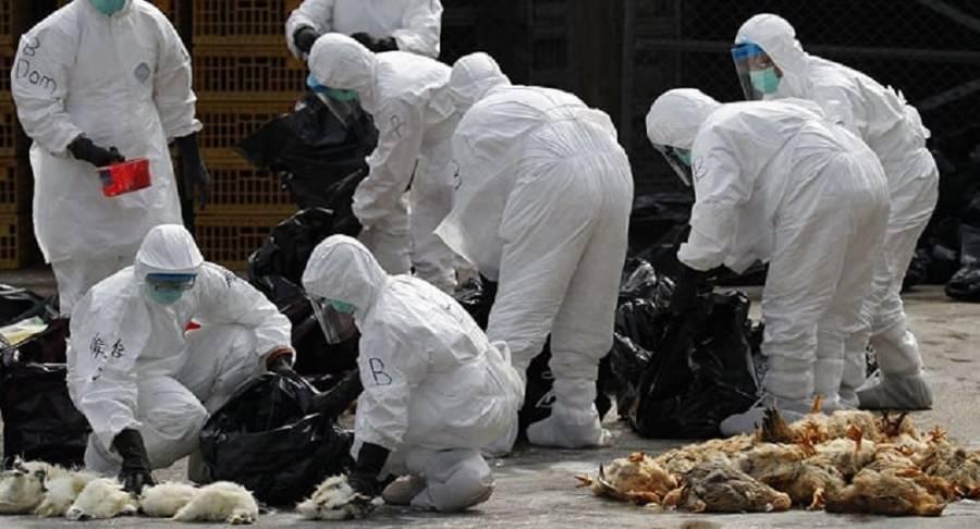 Confirma Filipinas nuevo brote de gripe aviar #H5N6