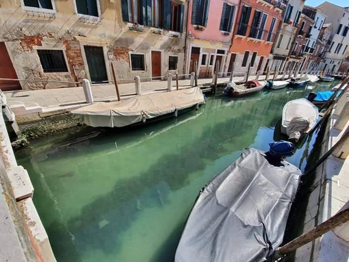 Canales de Venecia lucen cristalinos por COVID-19
