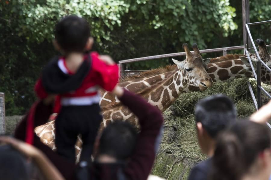 Cierran zoológicos en la CDMX por coronavirus