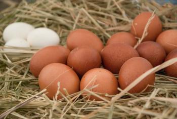 Sube el precio del cartón de huevo en Oaxaca a 80 o 90 pesos