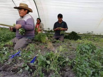 """Discriminan a organizaciones de agricultores durante la reunión """"Cumbre""""."""