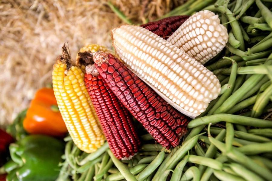 Anuncian primera etapa de programa de apoyo a productores medianos de maíz