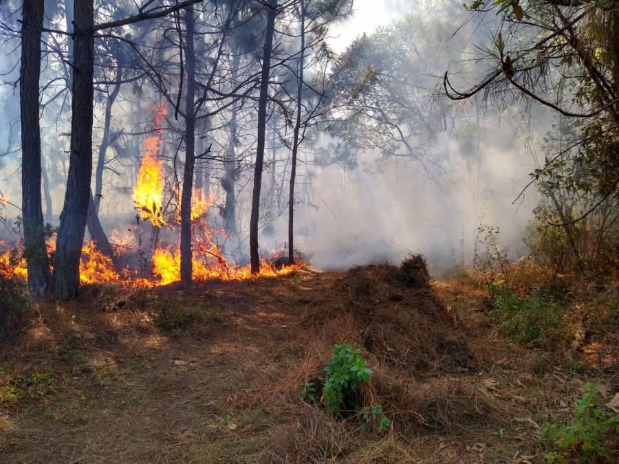 Suman 28 incendios forestales activos en México