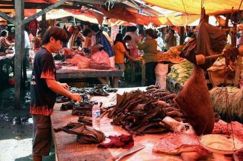 Murciélagos y especies exóticas vuelven a la venta en China