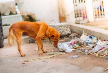 Alertan posible aumento de abandono de mascotas