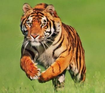 Zoológicos refuerzan seguridad de animales porCovid