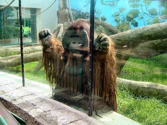 Protegen a felinos y primates del COVID-19 en el Zoológico de Chapultepec