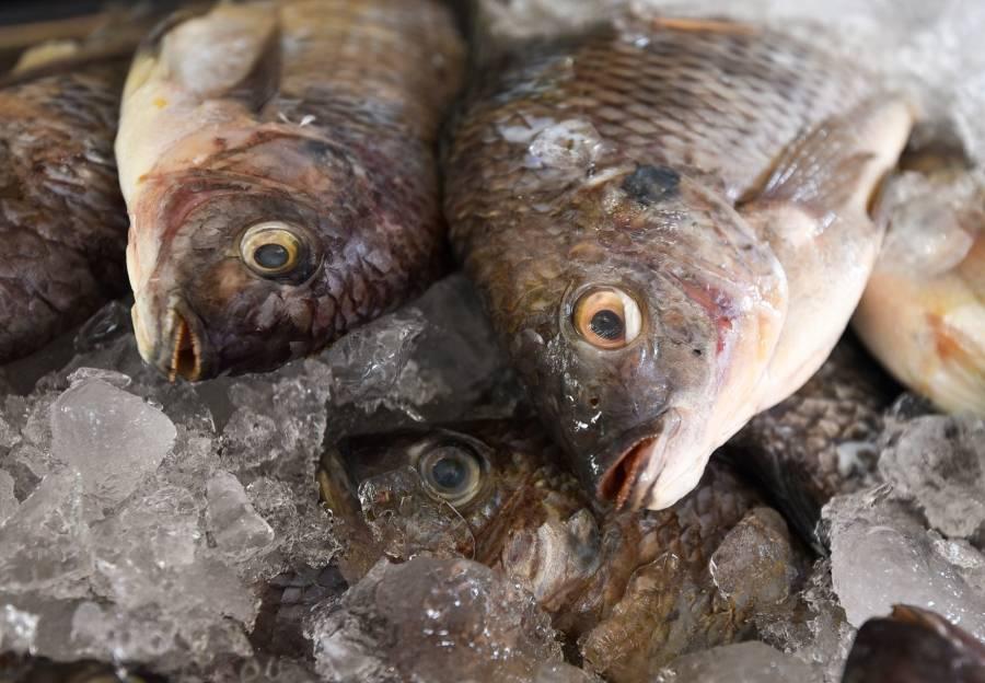 Poblanos abarrotan negocios de pescados y mariscos pese contingencia de salud