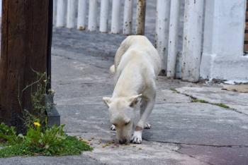 China borra a perros y gatos de lista de animales comestibles tras brote de Covid-19