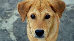 …Y pide no abandonar a mascotas por Covid-19