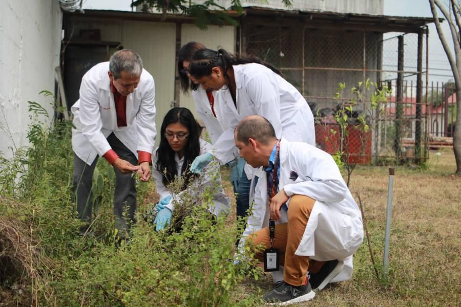 Especialistas del politécnico atacan contra hongos y bacterias que dañan a las plantas y seres humanos