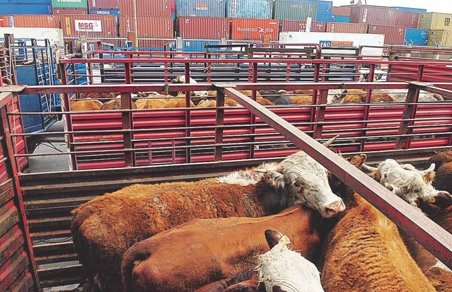 Repunta en última semana de marzo exportación de ganado en pie a Estados Unidos