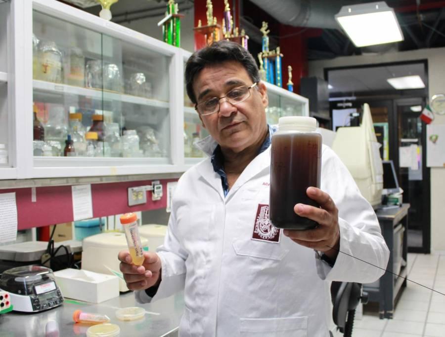 IPN desarrolla biofungicida que elimina hongos en cultivos de maíz, sorgo y algodón