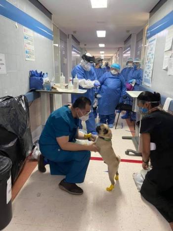 Perrito de ayuda en hospital de la CDMX