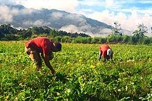 Avanza 45.5% entrega de apoyos a agricultores