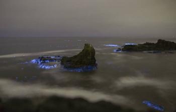 Confinamiento provoca mayor bioluminiscencia en costas mexicanas